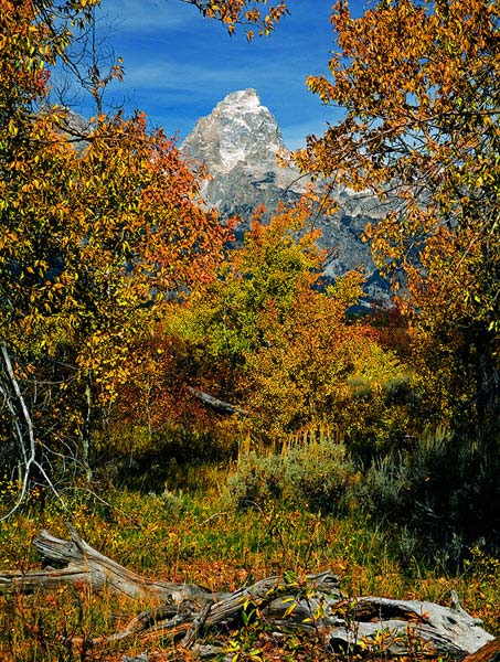 A Single Grand Teton in Fall